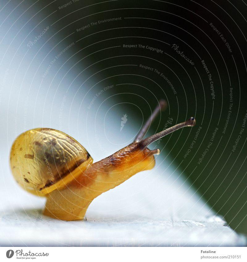 Finchen Natur Tier hell Umwelt natürlich Wildtier Schnecke Fühler krabbeln Makroaufnahme Bewegung schleimig Unschärfe Schneckenhaus Tierjunges