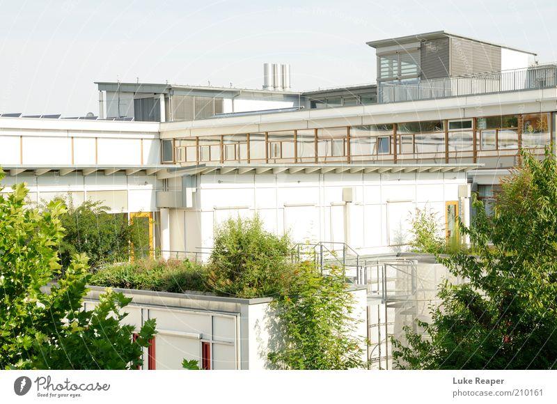 Mutter Natur holt sich wieder, was ihr gehört weiß Baum Stadt grün Haus Erholung Architektur Fassade modern Dach Häusliches Leben