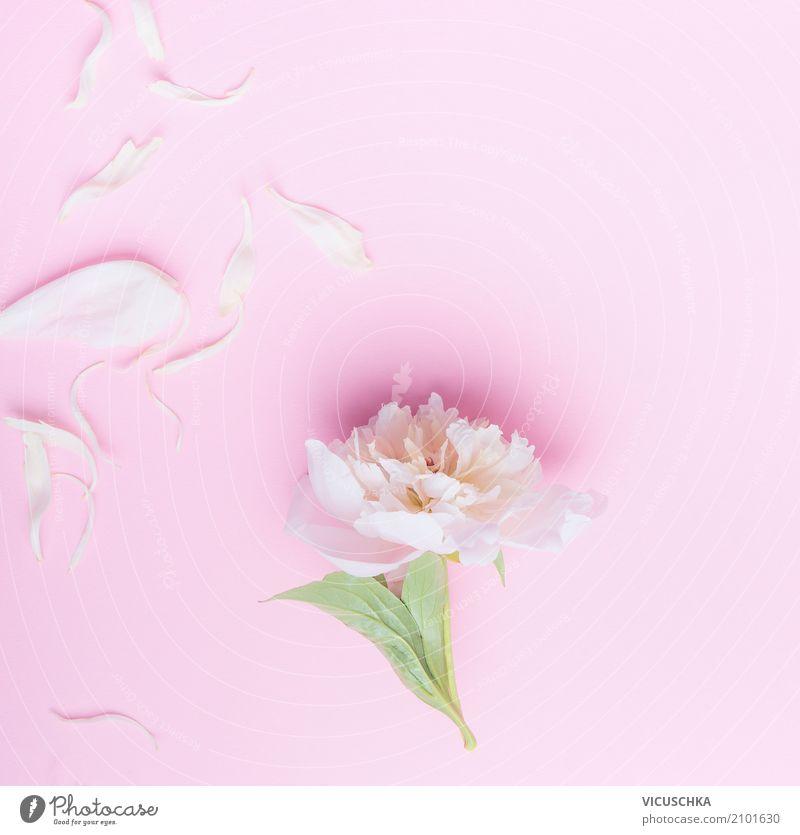 Pastell rosa Pfingstrose Blumen und Blütenblätter Natur Pflanze Sommer weiß Blatt Freude Lifestyle Liebe Hintergrundbild Stil Feste & Feiern Stimmung Design