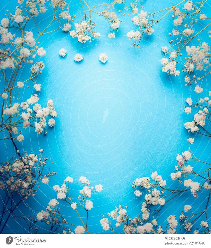 Weiße Blumen Rahmen auf blauem Hintergrund Natur Pflanze weiß Leben Lifestyle Blüte Liebe Hintergrundbild Stil Feste & Feiern Design Dekoration & Verzierung