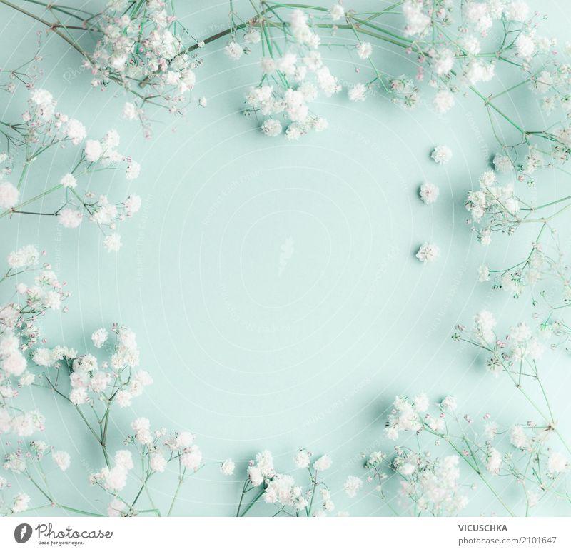Floral türkisblauer Hintergrund mit weißen Blumen Natur Pflanze schön Lifestyle Liebe Hintergrundbild Stil Feste & Feiern Design Dekoration & Verzierung