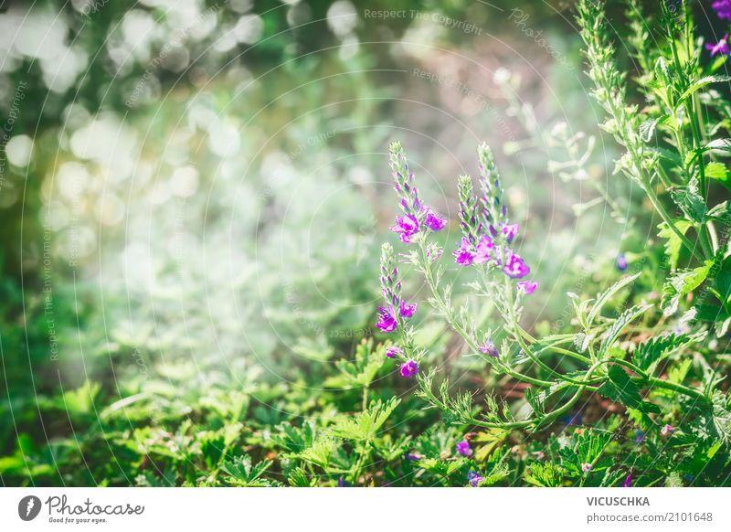 Grüner Natur Hintergrund mit Gras, Blumen Pflanze Sommer schön grün Lifestyle Wiese Hintergrundbild Garten Design Park Sträucher Schönes Wetter Weide
