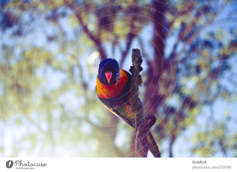 You! Natur Tier Wildtier Vogel Allfarbloris 1 ästhetisch exotisch blau gelb Blick mehrfarbig Farbfoto Außenaufnahme Textfreiraum links Textfreiraum rechts