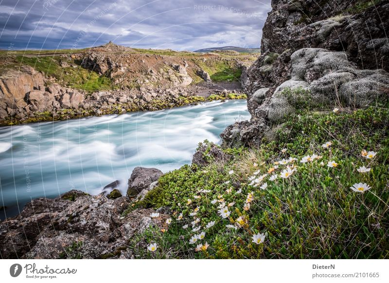 Aufblühen Himmel Natur Pflanze Sommer grün Wasser weiß Landschaft Blume Wolken Umwelt Blüte Wiese Gras grau braun