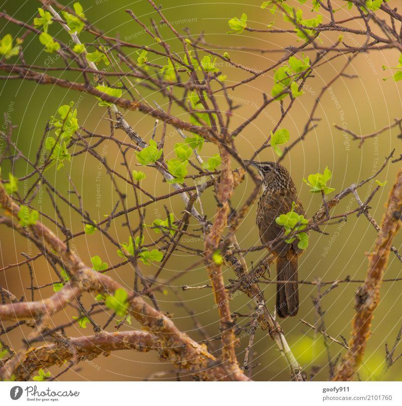 Gut getarnt und doch gefunden :-))) Umwelt Natur Landschaft Pflanze Tier Luft Frühling Sommer Schönes Wetter Wärme Dürre Baum Blatt Wildpflanze Wüste Namibia