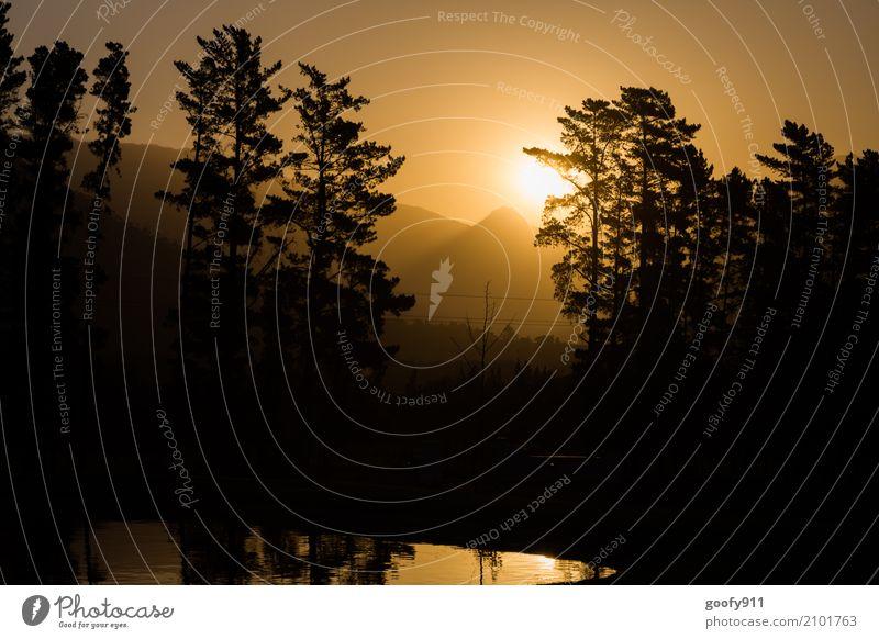 Sundowner in Franschhoek Südafrika Umwelt Natur Landschaft Himmel Sonne Sonnenaufgang Sonnenuntergang Sonnenlicht Frühling Sommer Schönes Wetter Wärme Baum