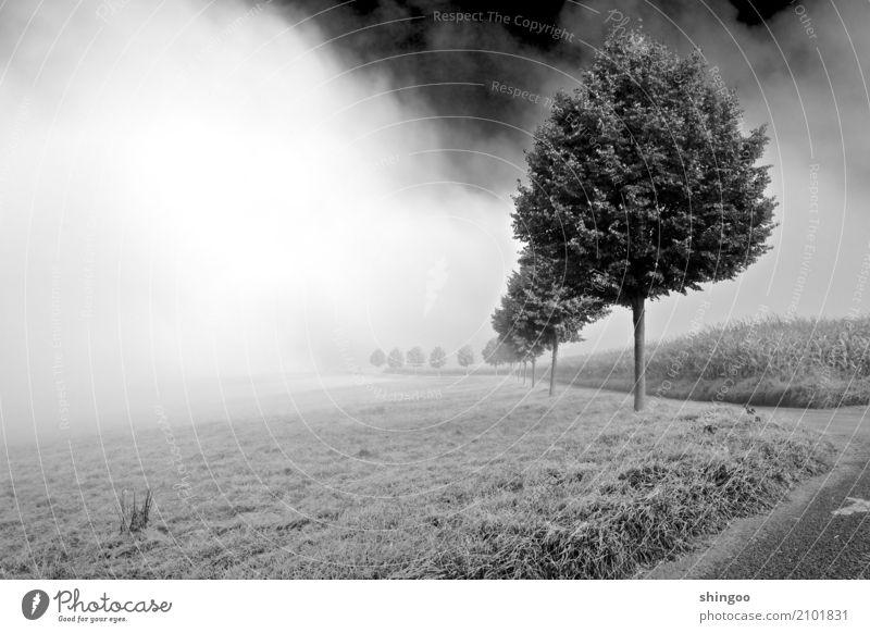 Nebular Straße Natur Landschaft Pflanze Luft Himmel Wolken Frühling Wetter Schönes Wetter schlechtes Wetter Nebel Baum Gras Nutzpflanze Wildpflanze Feld Wald