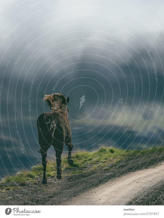 Begegnung III Natur Landschaft Pflanze Tier Himmel Wolken Frühling schlechtes Wetter Nebel Gras Felsen Berge u. Gebirge Pferd 1 braun grau grün Island Piste