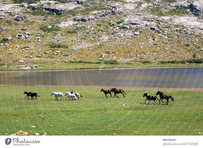 wild horses Natur Pflanze grün Wasser Landschaft Tier Umwelt Wiese Gras lachen See braun Felsen Zufriedenheit wandern Erde
