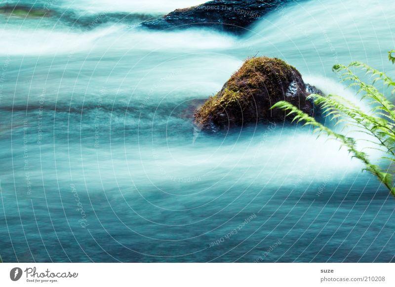 *Bildrauschen* Abenteuer Umwelt Natur Landschaft Pflanze Wasser Klima Gras Sträucher Farn Grünpflanze Wildpflanze Felsen Flussufer Bach Stein entdecken