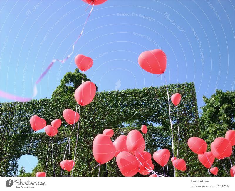 Viele Herzen für Euch! Freude Glück Park Luftballon Zeichen Schnur Feste & Feiern Spielen Fröhlichkeit rot Gefühle Liebe Romantik Optimismus Stimmung Hecke