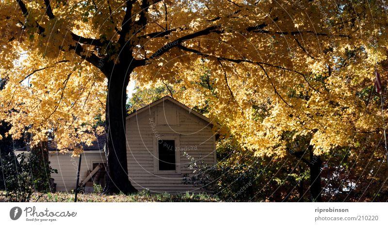 Baum ruhig Blatt gelb Herbst Garten Wärme Zufriedenheit braun gold Frieden Schutz natürlich Gelassenheit Nostalgie Herbstlaub