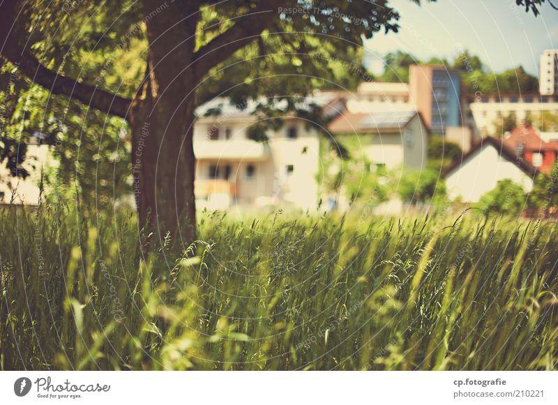 Kleinstadt Idylle Natur Baum Stadt Pflanze Haus Wiese Gras Gebäude Wärme Landschaft Baumstamm Schönes Wetter Grünpflanze Stadtrand