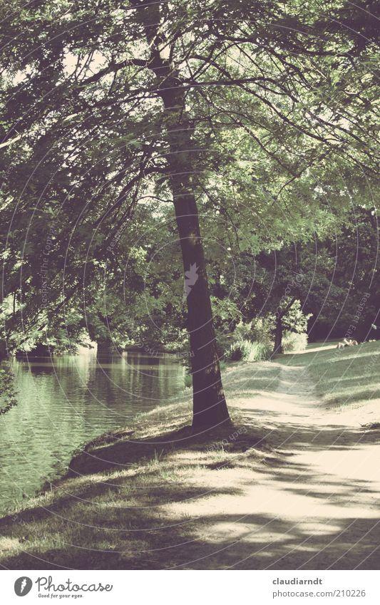 Theaterparkbaum Natur Landschaft Pflanze Wasser Sommer Schönes Wetter Baum Park Flussufer Idylle Wege & Pfade Schattenspiel Retro-Farben ruhig Rasen Sandweg
