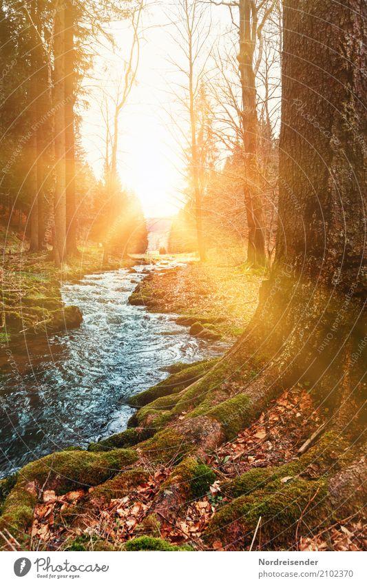 Ein Morgen im Herbst Ausflug wandern Natur Landschaft Pflanze Urelemente Wasser Sonne Sonnenaufgang Sonnenuntergang Schönes Wetter Baum Moos Park Wald Bach