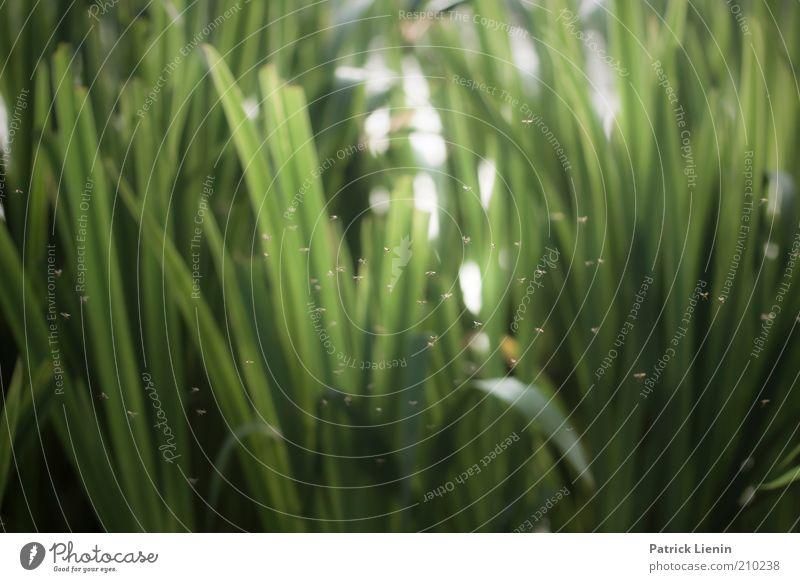 bzzzzzzzz Natur Wasser grün Pflanze Sommer Tier Gras See Landschaft Umwelt mehrere Tiergruppe Klima Flügel Wildtier