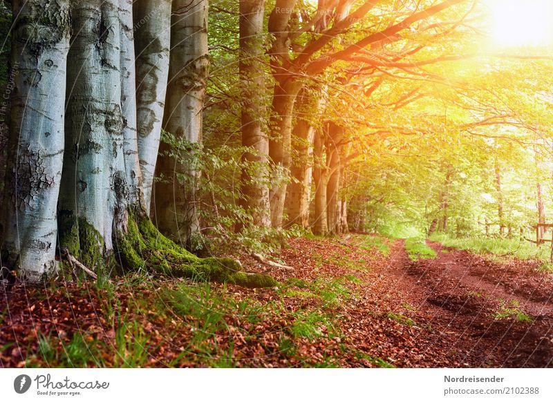 Am Waldrand Ausflug wandern Natur Landschaft Sonne Sonnenaufgang Sonnenuntergang Sommer Herbst Klima Wetter Schönes Wetter Wege & Pfade Freundlichkeit
