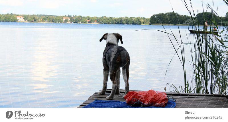 Der See ruft... Natur Himmel Sommer Ferien & Urlaub & Reisen Tier Erholung Hund Zufriedenheit warten klein frei Tourismus stehen Freizeit & Hobby beobachten