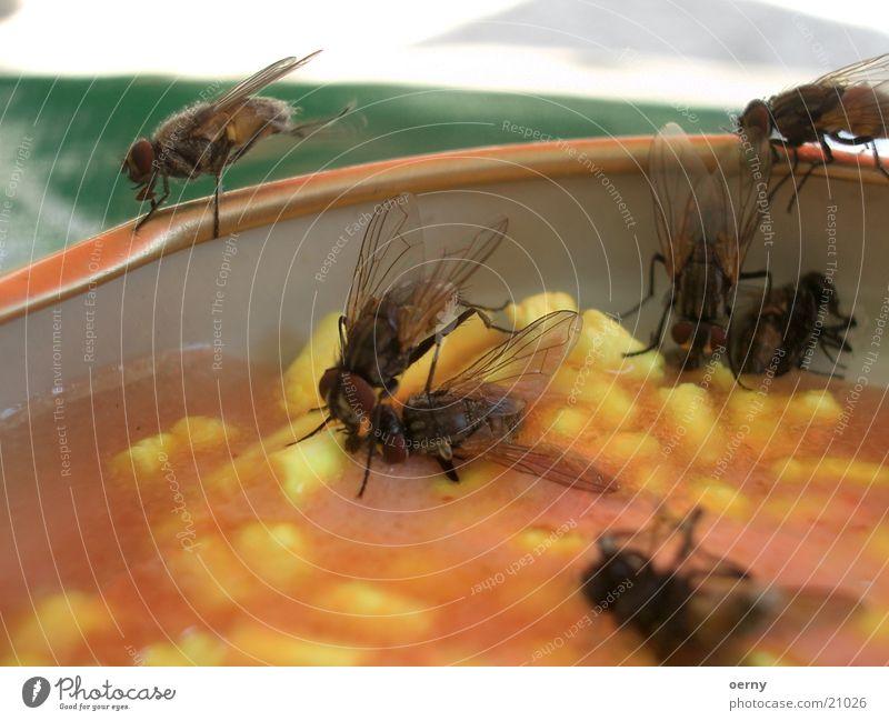 Fliegentot vergiften Plagegeist gelb Insekt Angelköder fliegen Gift Tod