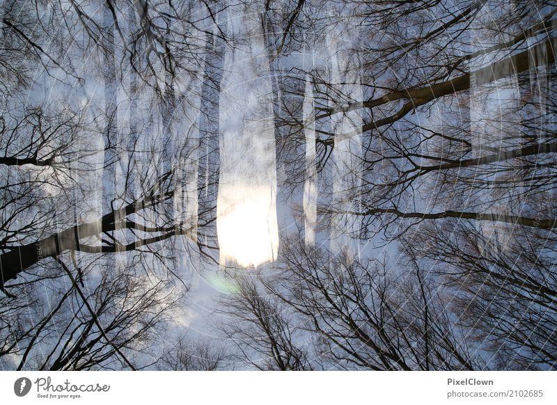 düsterer Wald Ferien & Urlaub & Reisen Tourismus Ausflug wandern Landwirtschaft Forstwirtschaft Umwelt Natur Landschaft Pflanze Baum Blatt Moor Sumpf