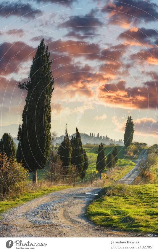 Winding Pfade mit Zypressen zwischen den grünen Feldern. schön Ferien & Urlaub & Reisen Sommer Umwelt Natur Landschaft Pflanze Himmel Wolken Horizont Baum Gras