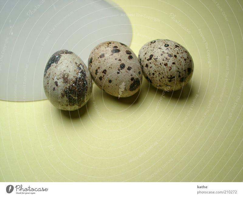 Tick, Trick und Track Natur Tier Wärme braun Zusammensein liegen außergewöhnlich wild Lebensmittel frisch Ernährung ästhetisch Urelemente nah Ei Bioprodukte