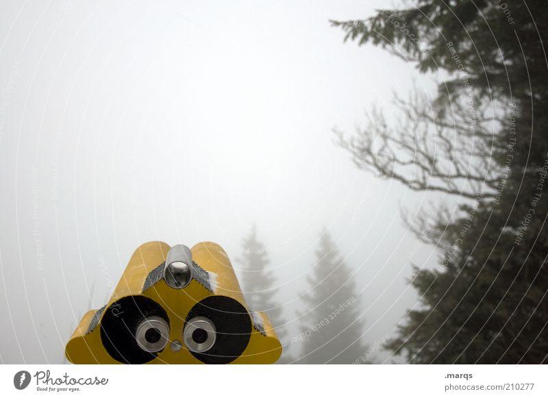 Trüb Natur Baum kalt Herbst Stimmung Nebel Ausflug Aussicht Klima beobachten Sehnsucht Neugier entdecken Wachsamkeit Dunst Ferien & Urlaub & Reisen