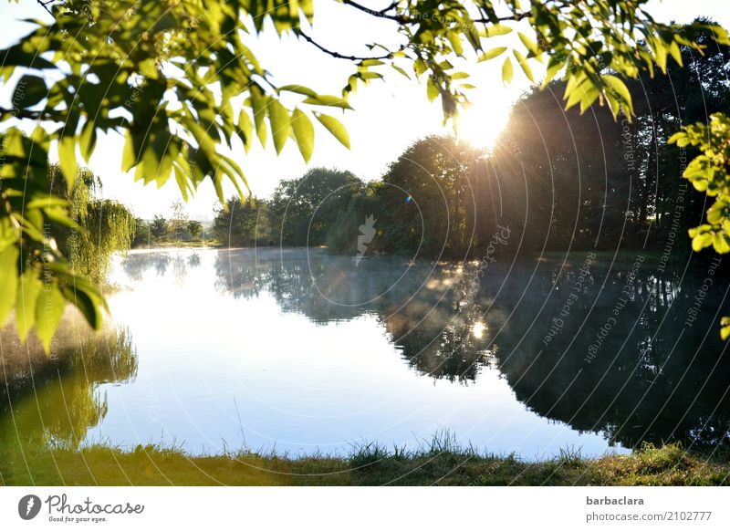 Morgens um sieben Natur Landschaft Wasser Himmel Sommer Schönes Wetter Nebel Pflanze Baum Seeufer Teich leuchten hell Stimmung Vorfreude Verschwiegenheit