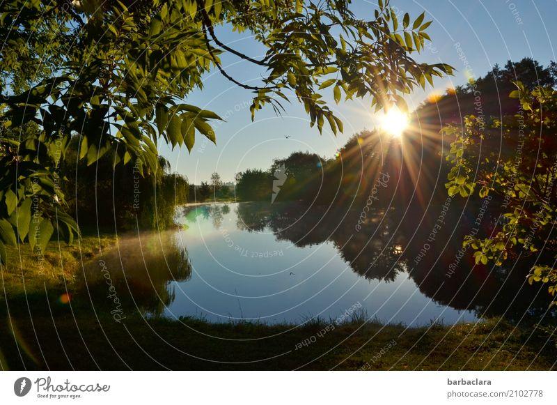 Fischfutter | Reiher kreist über Fischweiher Umwelt Natur Landschaft Urelemente Wasser Wolkenloser Himmel Sonne Baum Sträucher Teich See Vogel Stimmung Idylle