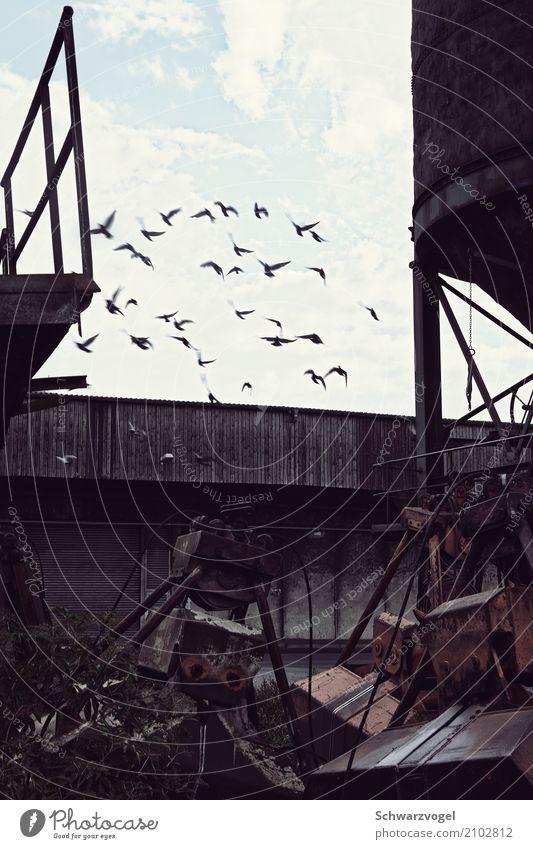 up & away Industrie Maschine Industrieanlage Tier Wildtier Vogel Taube Tiergruppe Schwarm Metall frei Stimmung Lebensfreude Zusammensein Hoffnung Fernweh