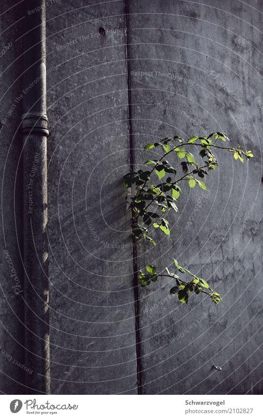 I don't care Natur Pflanze Grünpflanze Wildpflanze Beton Wachstum rebellisch trist grau grün Optimismus Kraft Willensstärke Mut Tatkraft Leben diszipliniert