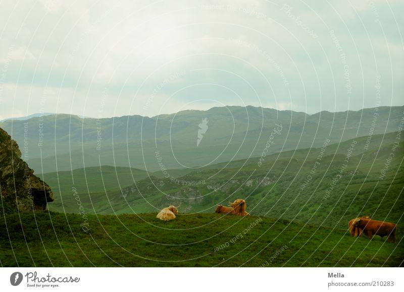Geruhsamkeit Natur Himmel grün Ferien & Urlaub & Reisen Ferne Wiese Gras Berge u. Gebirge grau Landschaft Stimmung Zusammensein Umwelt frei Horizont Felsen