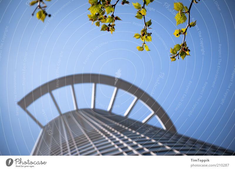 Baumkrone Natur Baum Blatt Haus Architektur Gebäude Fassade hoch Hochhaus Ast Geldinstitut Bankgebäude Bauwerk Skyline Schönes Wetter