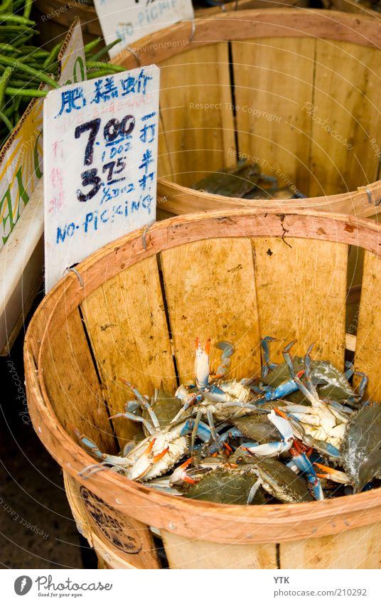 Finger weg! Tier Leben gefährlich Schriftzeichen Wildtier Tiergruppe Hinweisschild trocken berühren Schmerz Geruch verkaufen Markt Handel exotisch Korb