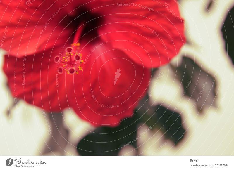 Florales. Natur Blume Pflanze rot Sommer Farbe Leben Blüte Frühling Umwelt ästhetisch einzigartig natürlich Blühend Duft exotisch
