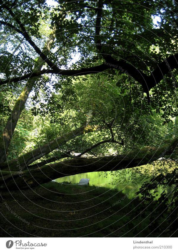 Grünes Paradies #1 Natur Wasser schön Baum Pflanze Sommer Wald See Ast Idylle Geborgenheit Paradies Blatt Linde Blätterdach
