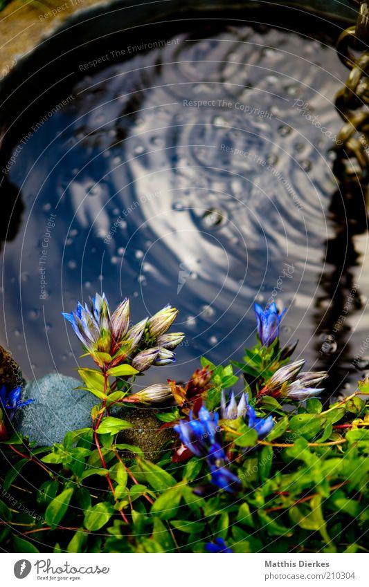 Brunnen Natur Pflanze Sommer Grünpflanze Nutzpflanze exotisch ästhetisch Blume Blüte Wasser Geplätscher fließen Idylle Wachstum blau violett schön zart Farbfoto