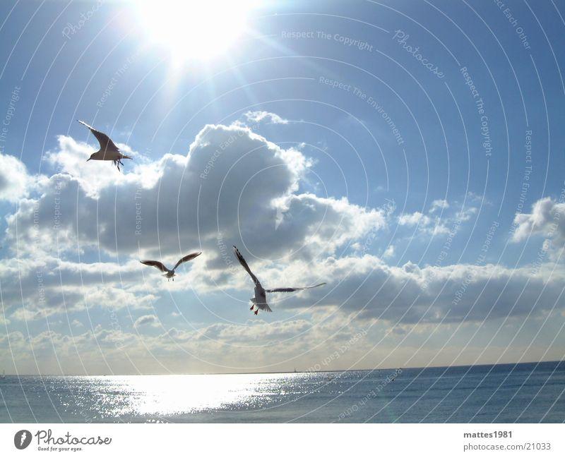 Vogelfrei Möwe Meer kalt Sommer See Küste Brandung Wellen Seemann Angeln Fischer Sonne reflektion Freiheit blau Reflexion & Spiegelung Wasser sun ocean birds