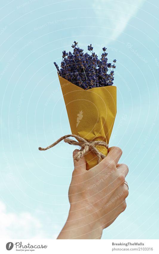 Frauenhand mit Blumenstrauß von Blumen über blauem Himmel Lifestyle Mensch feminin Junge Frau Jugendliche Erwachsene Hand 1 Natur genießen Liebe Duft einfach