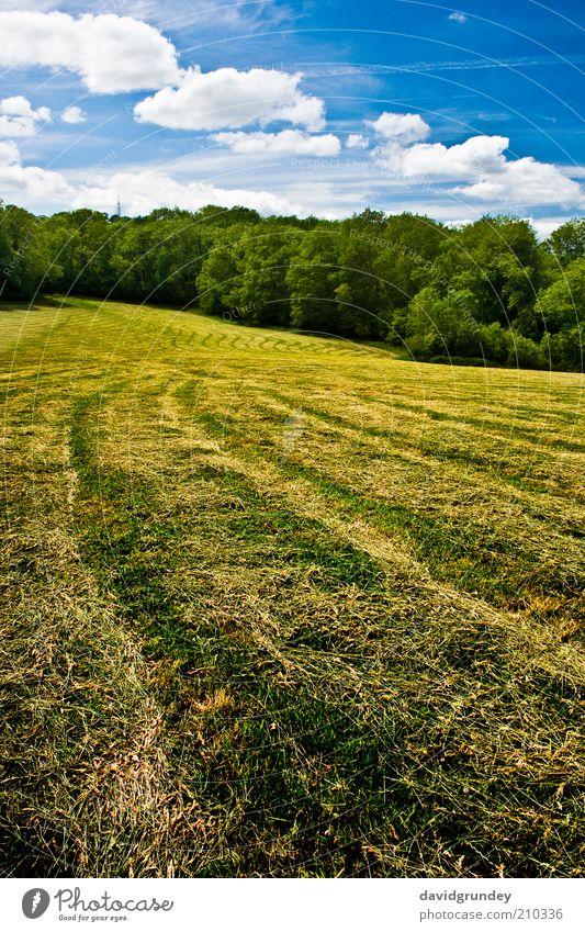 Bereich Landschaft Wolken Sommer Baum Gras Wiese Feld blau gelb gold grün Farbfoto Außenaufnahme Menschenleer Sonnenlicht Zentralperspektive Tag