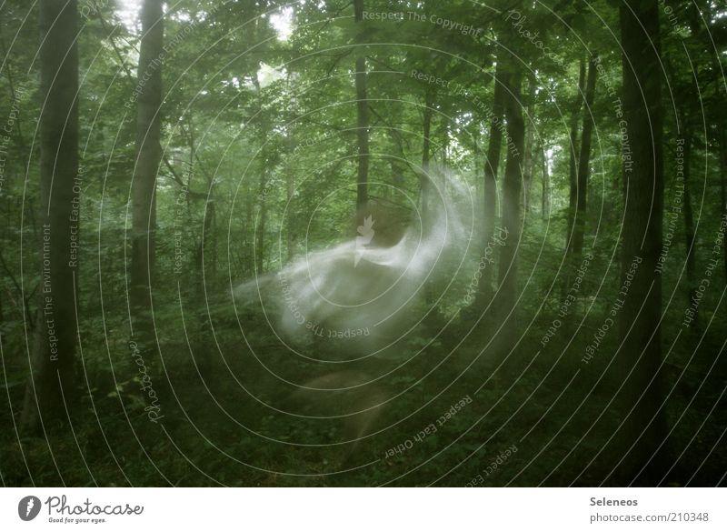 Waldfee Ausflug Mensch Kunst Umwelt Natur Landschaft Sommer Pflanze Baum Bewegung drehen Tanzen träumen geheimnisvoll Langzeitbelichtung Fee Fabelwesen Elfe