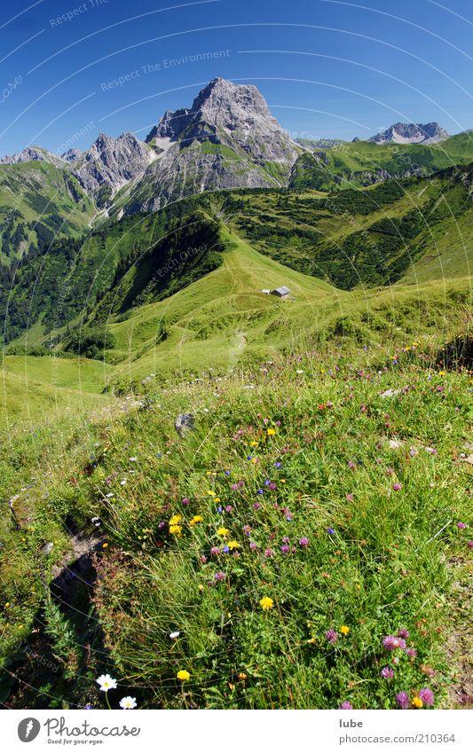 Alpe Derren 3 Natur Blume Pflanze Sommer Ferien & Urlaub & Reisen ruhig Ferne Wiese Berge u. Gebirge Landschaft Umwelt Horizont Felsen Ausflug Tourismus Klima
