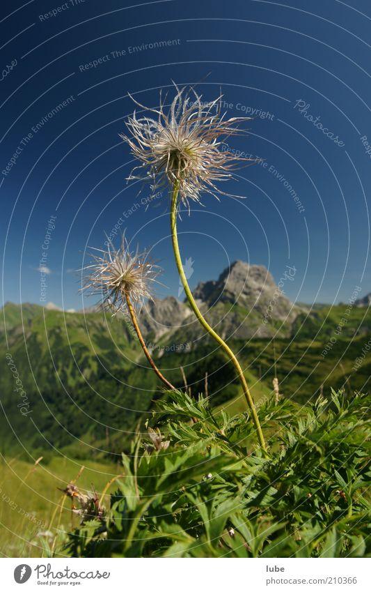 Strubobubo Natur grün Pflanze Sommer Ferien & Urlaub & Reisen Ferne Blüte Berge u. Gebirge Landschaft Stimmung Umwelt Felsen Ausflug Tourismus Sträucher Klima