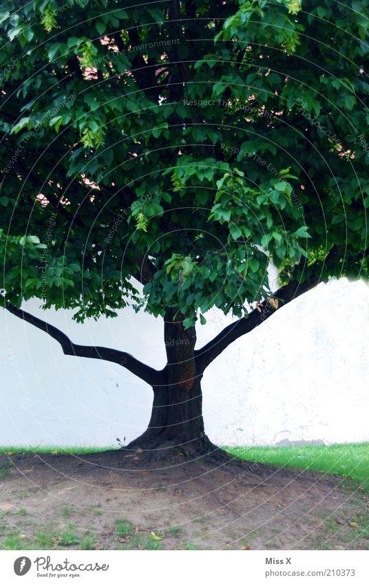 in der Mitte Baum Park Wachstum rein Symmetrie Farbfoto Außenaufnahme Textfreiraum links Textfreiraum rechts Hintergrund neutral Textfreiraum unten Natur