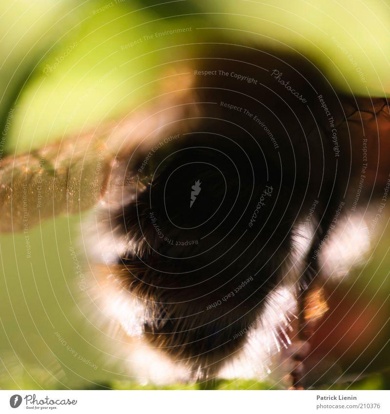 haarsträubend Natur schön Pflanze Sommer Tier Umwelt Arbeit & Erwerbstätigkeit Wildtier natürlich groß außergewöhnlich ästhetisch Flügel niedlich beobachten