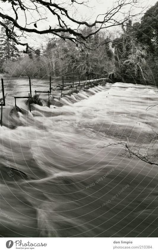cong river Umwelt Wasser Sträucher Wald Flussufer congriver cong co.mayo Nordirland Brücke groß wild schwarz weiß Verfall analog Schwarzweißfoto Außenaufnahme