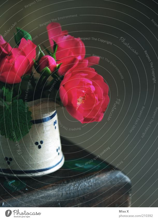 Rosen Blume Blühend Duft dunkel Kitsch klein Vergänglichkeit Vase Farbfoto mehrfarbig Innenaufnahme Nahaufnahme Textfreiraum rechts Schatten