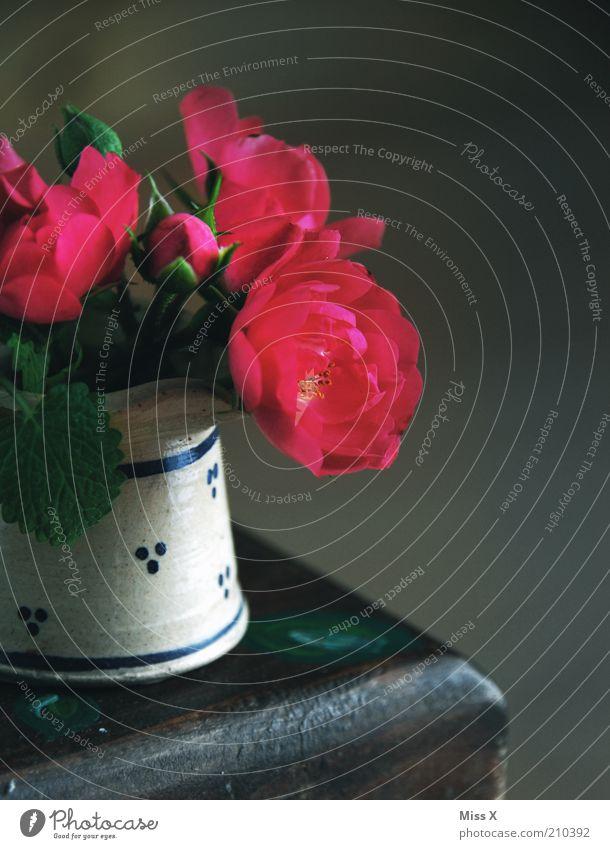 Rosen Blume dunkel klein Tisch Kitsch Dekoration & Verzierung Vergänglichkeit Blühend Duft Vase Krug Tonkrug