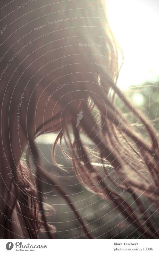 Spätsommer feminin Frau Erwachsene Jugendliche Kopf Haare & Frisuren Umwelt Natur Sommer Klima Schönes Wetter Wind Blick leuchten träumen ästhetisch frei schön