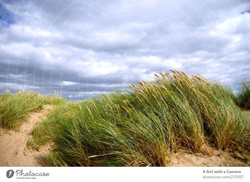 Windy Inch Natur grün blau Sommer Strand Ferien & Urlaub & Reisen Wolken Ferne Gras Freiheit Sand Landschaft Luft Küste Wind Umwelt